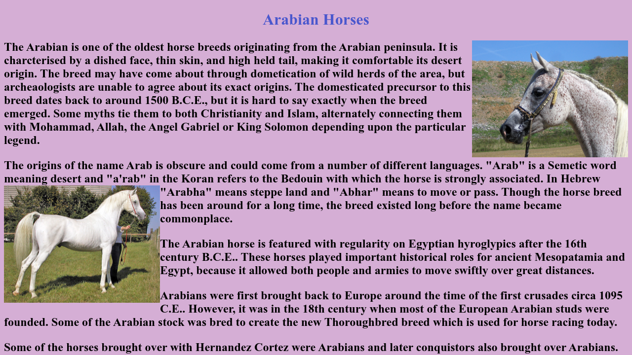 Arabian Horses Project 2 Html Css